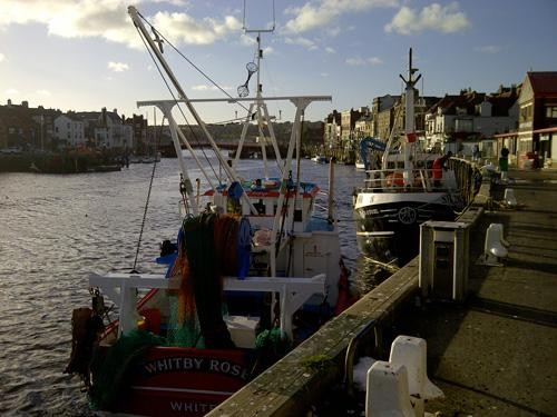 Whitby Rose